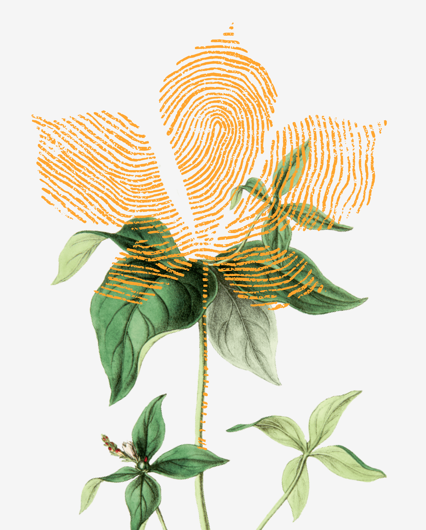 Botanical graphic in a gold color